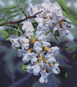 White Blossom, Black Locust by Lenni Workman