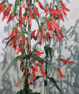 Penstemon by Lenni Workman